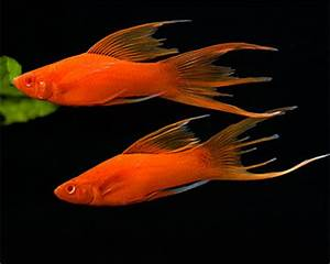 Nano Fish List