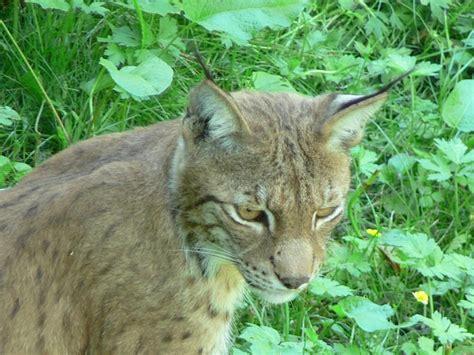 Animal, Close Up, Whiskers, Vertebrate