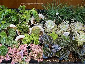 Miniature plants for fairy gardens smalltowndjscom for Miniature plants for fairy gardens