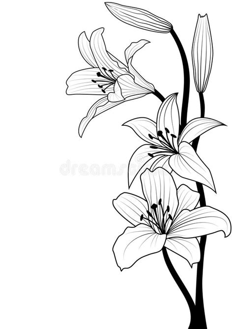 azuzena flower template azucena flower coloring pages sketch coloring page