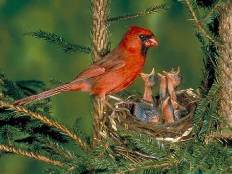 twitter principle applies to birds irl study shows