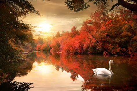 swan lake landscape wall mural red tree nature photo
