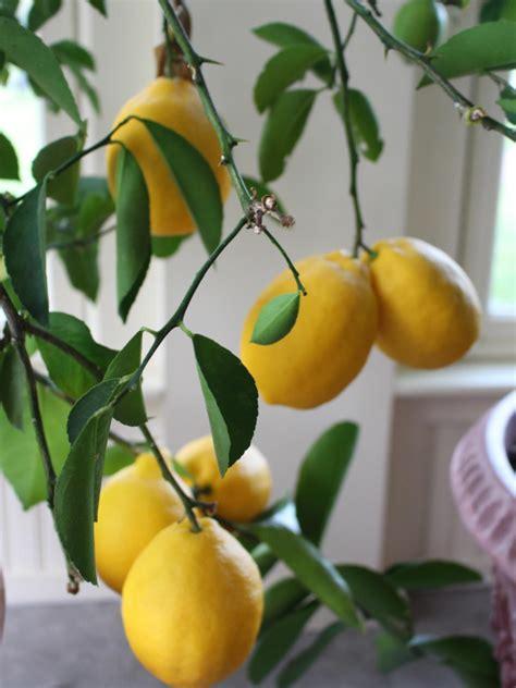 edibles   grow indoors diy network blog