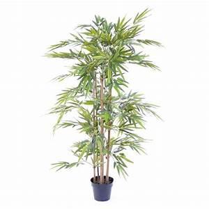 Plante D Intérieur Pas Cher : plante verte d interieur pas cher ~ Dailycaller-alerts.com Idées de Décoration