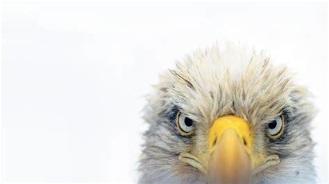 top gifts for birds audubon