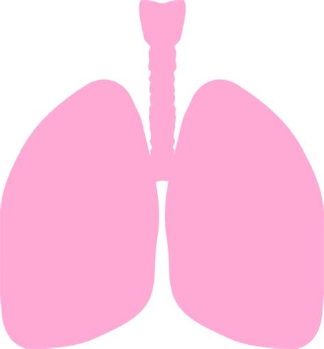Lungs Clipart Lungs Clip At Clker Vector Clip