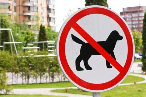 wann darf der vermieter hunde verbieten mydog365 magazin