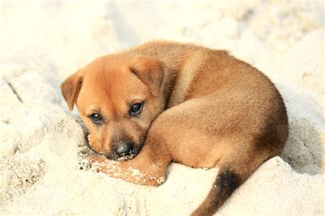 File Ee  Puppy Ee   On Halong Bay Jpg