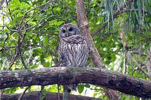 Everglades NP 18 MowryJournal com