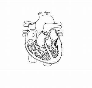 Free Fill In The Blank Heart Diagram