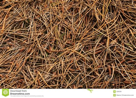 ecore flooring forest rx flooring forest floor stock photo image of outdoors tone ground