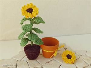 Sonnenblume Im Topf : blume h keln ~ Orissabook.com Haus und Dekorationen