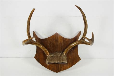 5 Point Plaque Shield Mounted White Tail Deer Antler Wall