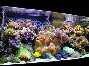 Coole Aquarium Deko : die besten 25 aquarium einrichten ideen auf pinterest betta aquarium aquarium aquascape und ~ Markanthonyermac.com Haus und Dekorationen