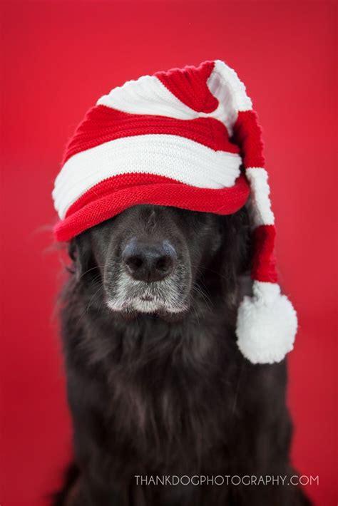 merry christmas thank dog dogs foster dogs christmas dog dogs dog