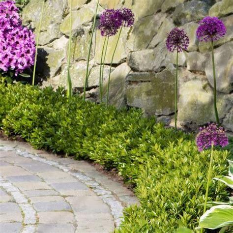 Garten Pflanzen Flensburg by Rhododendron Bloombux 174 G 228 Rtner P 246 Tschke Garten