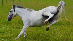 Bilder Von Pferden : osteopathie bei pferden mit h nden sanft heilen ~ Frokenaadalensverden.com Haus und Dekorationen