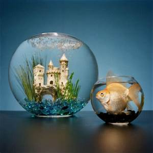 Large Goldfish In Small Bowl Looking At Castle In Large ...