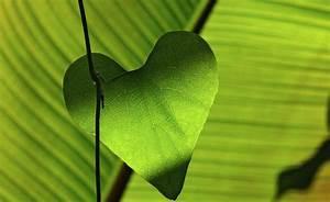 Wirkung Der Farbe Grün : die wirkung von farben auf deine arbeit compassioner ~ Markanthonyermac.com Haus und Dekorationen