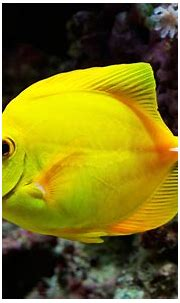 Important Information: Beautiful Fish Pictures & Wallpaper