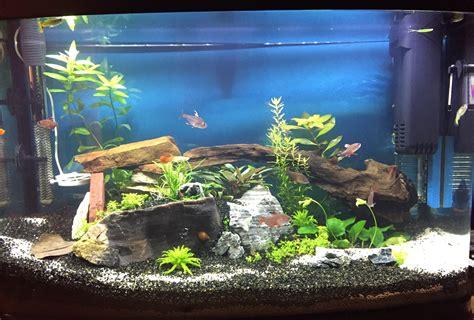 coh 233 rence dans le d 233 cor de diff 233 rents aquariums