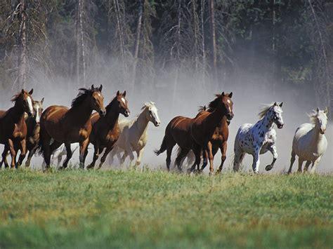 beautiful wallpapers  desktop horse wallpapers hd