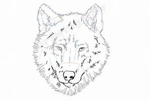 Wolf Head Drawing Step Step