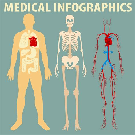 medical infographic  human body   vectors