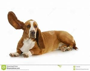 Dog listening stock photo. Image of camera, length, image ...