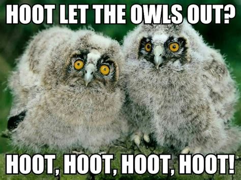 Owl Who Meme - 37 best images about owl memes on pinterest da fuq two s company and lol memes