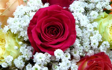 wallpaper red rose flower bouquet hd flowers