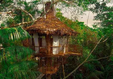 treehouse lodge  amazon iquitos peruperu holiday