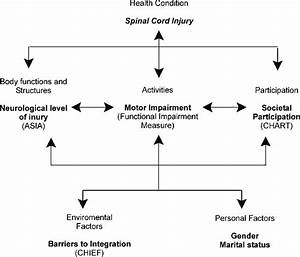 International Classification Of Functioning  Disability