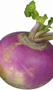 Collection of Turnip PNG HD. | PlusPNG