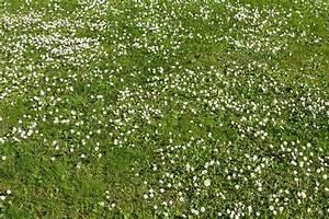 Unkraut Weiße Blüte : viele wei e kleine bl ten in draufsicht einer wiese ~ Lizthompson.info Haus und Dekorationen