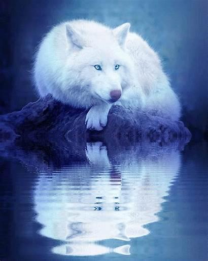 Spirit Animal Following Evolve