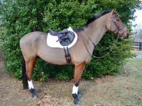 ventech leather girth choice girths professional monoflap brown professionals eventing nyls samuels modeling three 1675 nation eventingnation