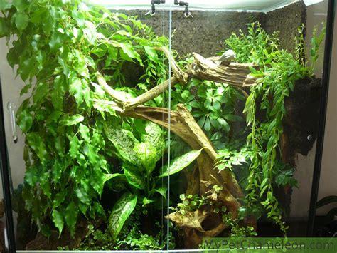 natural habitat  chameleons