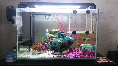 superfish tropical fish tank 60 litre compete set up in bognor regis expired friday ad