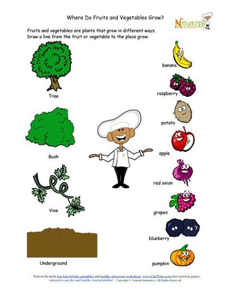all worksheets 187 nutrition worksheets for printable