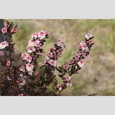 Top Ten Shrubs For Containers And Small Gardens Proven