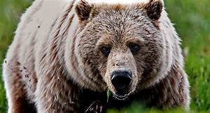 Cyclist Attacked And Killed At Work By Bear
