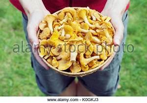 Einen Korb Bekommen Englisch : h nde halten frisch gepfl ckt bio karotten stockfoto bild 25480816 alamy ~ Orissabook.com Haus und Dekorationen