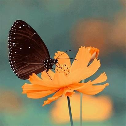 Butterfly Birthday Happy Pretty Flower Orange Flowers