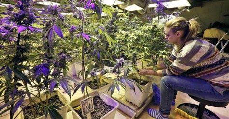transfert si鑒e social association marijuana terapeutica a lecce l 39 unico cannabis social d 39 italia il fatto quotidiano