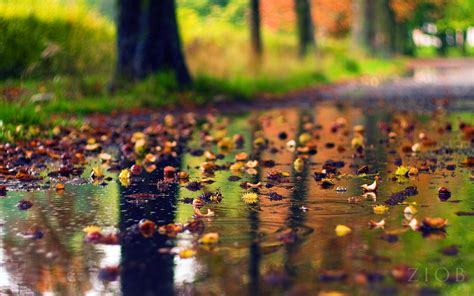Wallpaper Nature Autumn Rain Desktop Hd