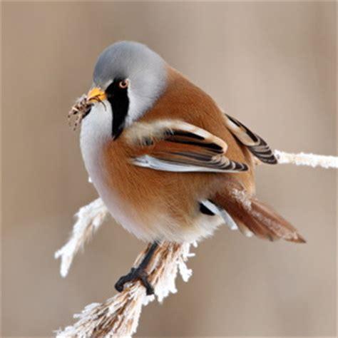 wie oft brüten meisen vogelfutterhaus treffpunkt nr 1 f 252 r meisen vogel und naturschutzprodukte einfach kaufen