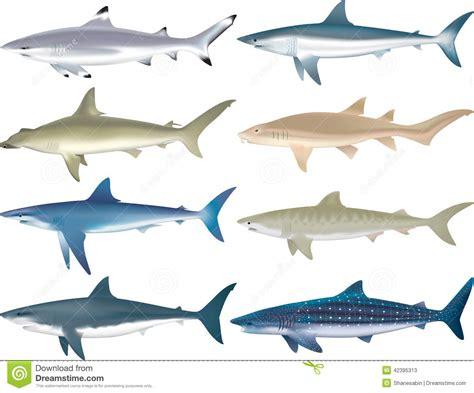 rekinow gatunki ilustracja wektor ilustracja zlozonej