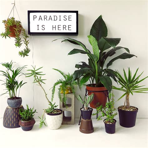 feng shui decor our top 7 unkillable indoor plants the desk