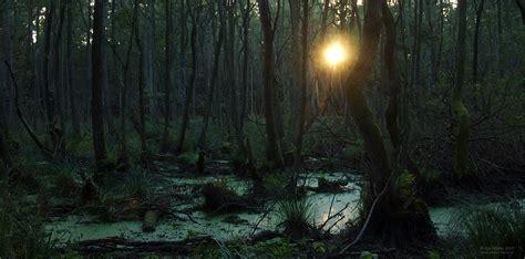 urwald forum fuer naturfotografen